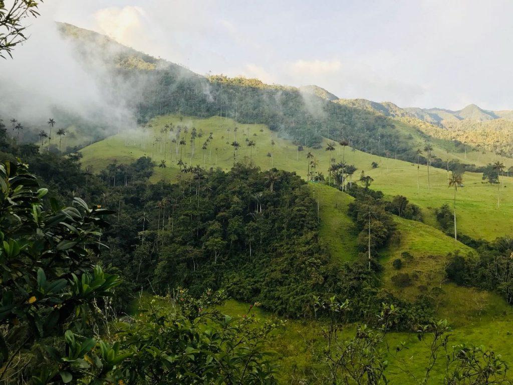 madenomada valle del cocora
